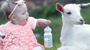 Как и когда кормить своего ребенка молоком в порошке?