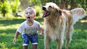 Почему животные в доме это хорошо?