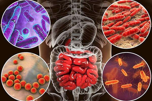 Роль микрофлоры